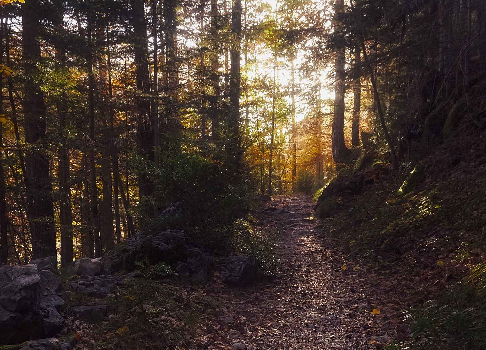Paisaje - Camino en ordesa